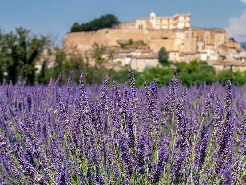 Se promener en Drôme provençale